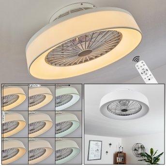 Moli ventilatore da soffitto LED Bianco, 1-Luce, Telecomando